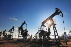 olaj, olajmező