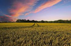 50 milliárdos keret nyílik: hamarosan erre pályázhatnak a gazdák